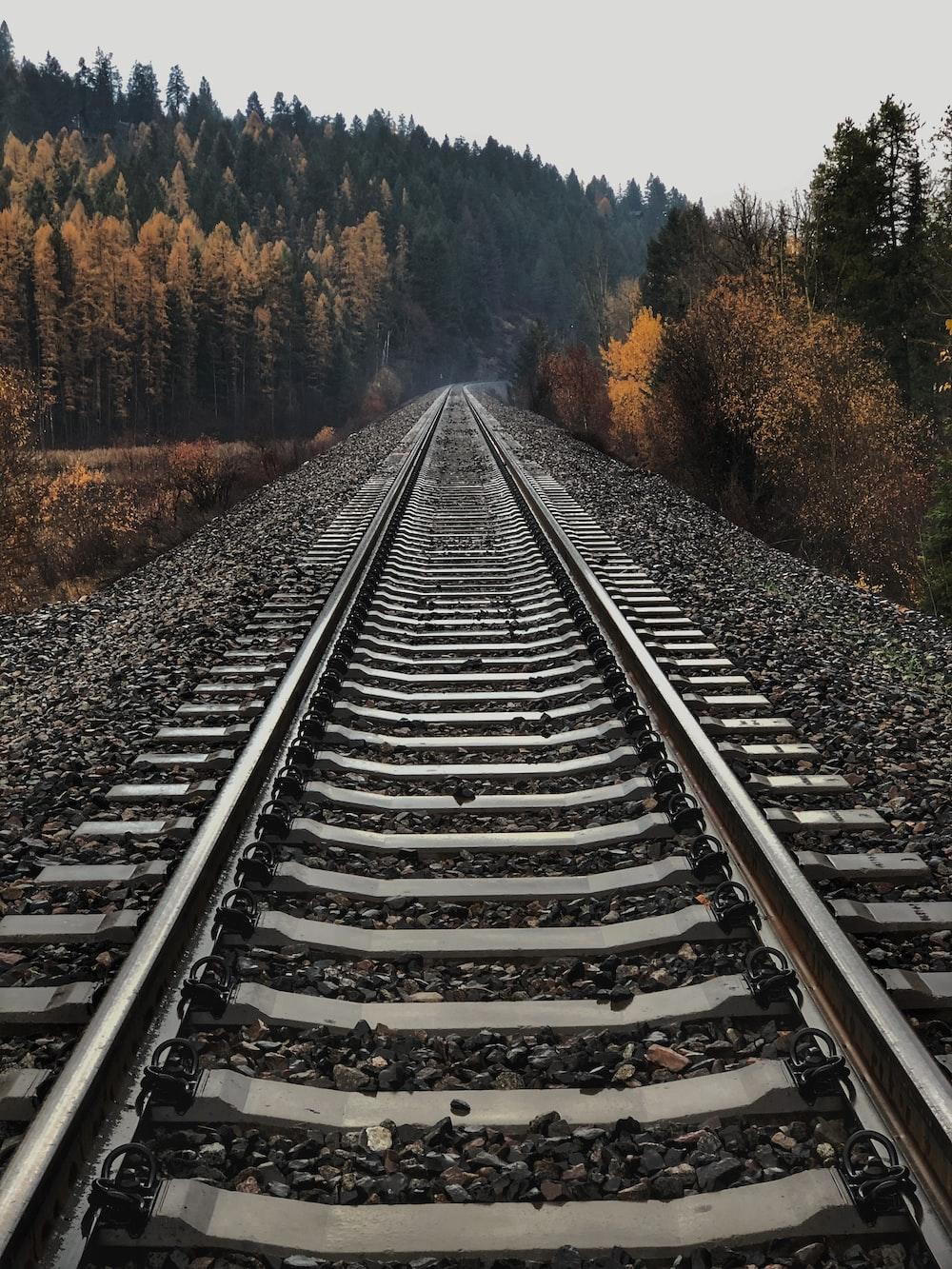 railway between tall trees