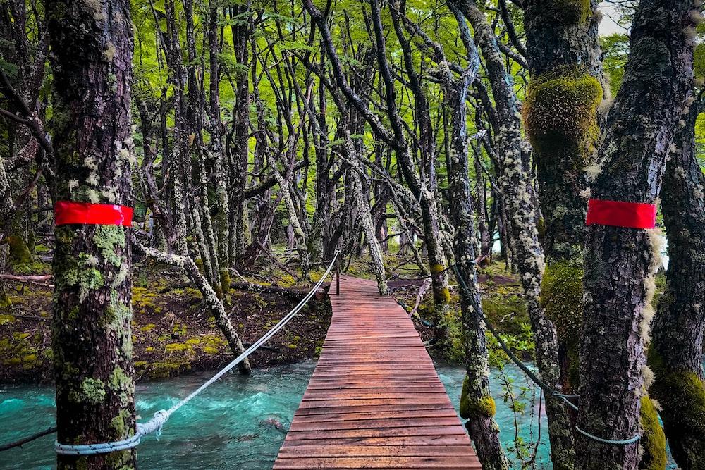 brown wooden hanging bridge tied on trees