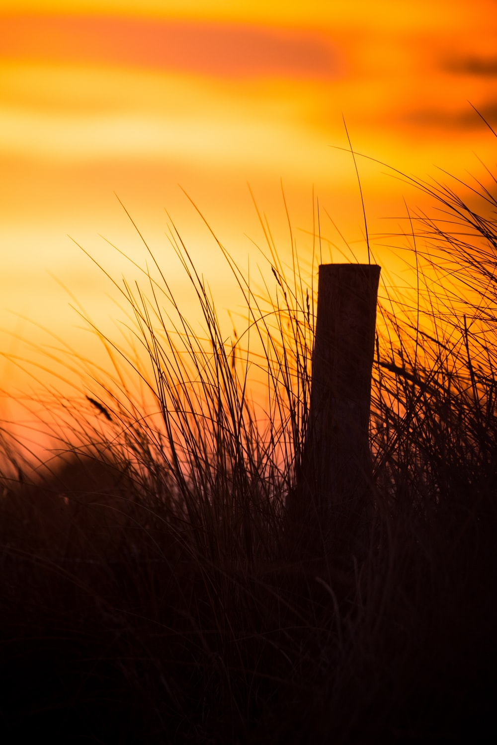 silhouette of grasses during golden hour