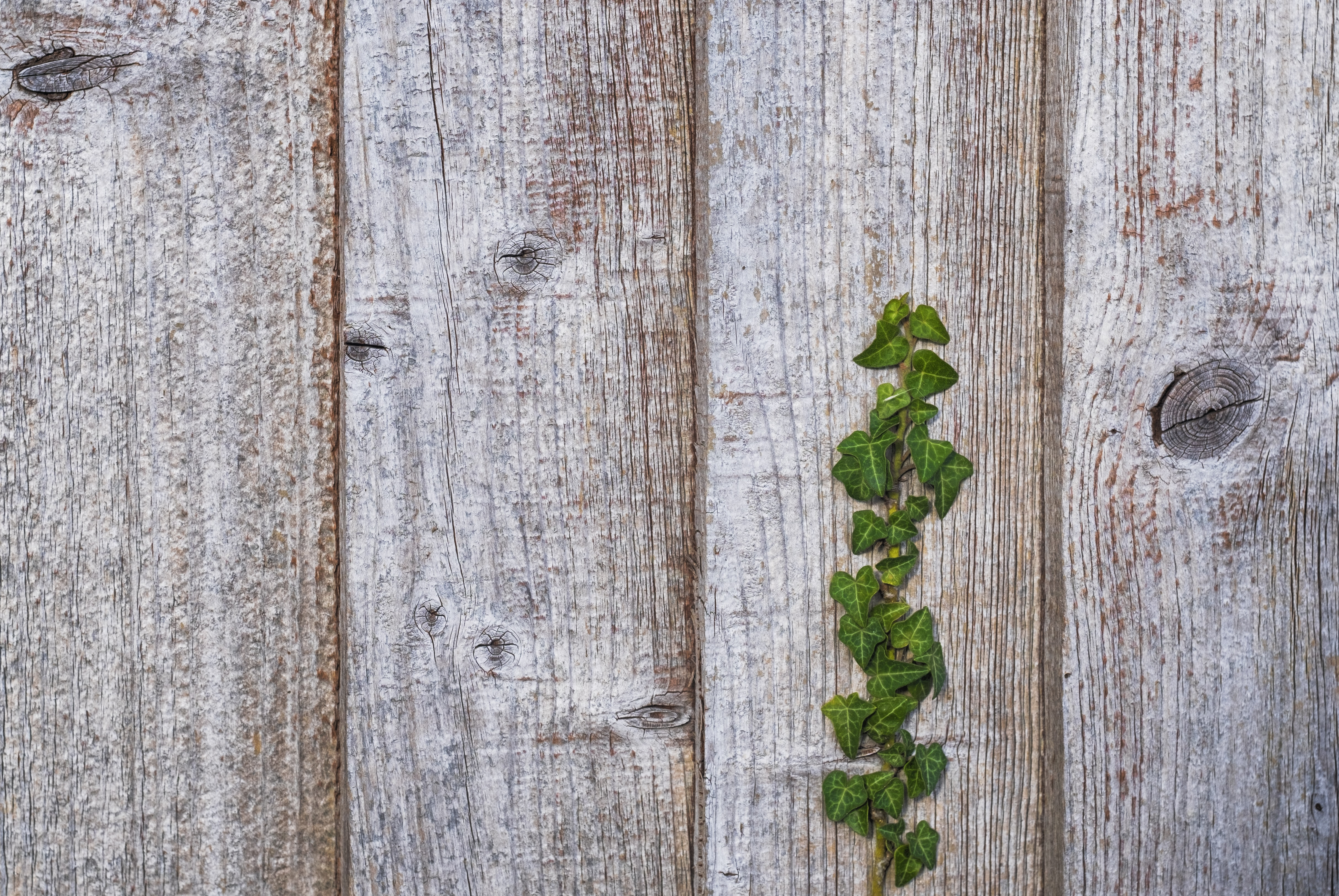 green leafed plant on brown wooden plank