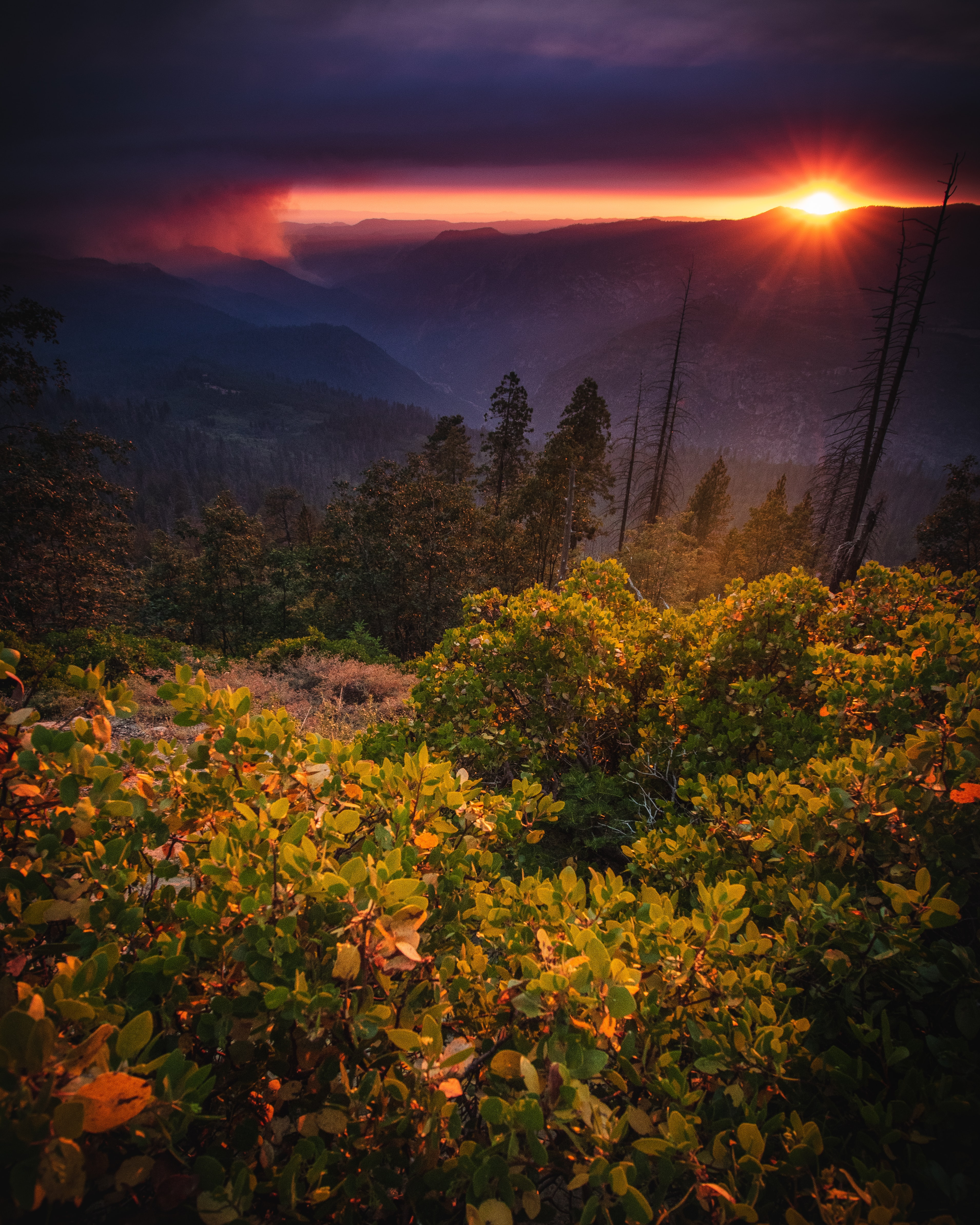 landscape photo of yellow flowers on mountain