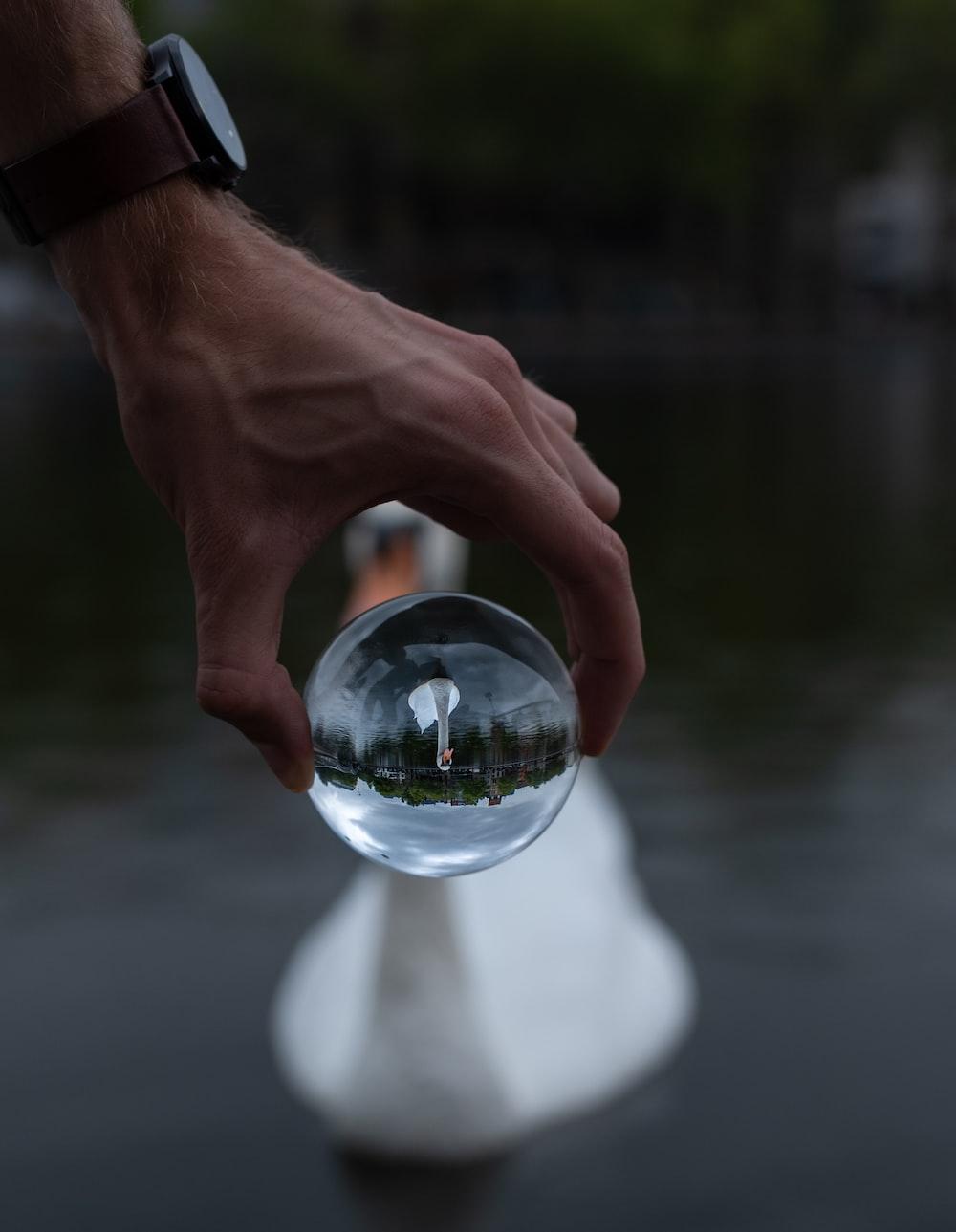 white swan seen through a clear glass ball