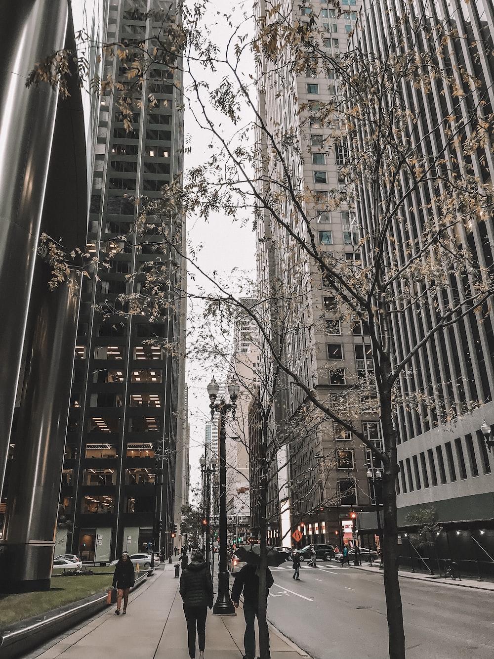 people walking beside street in city