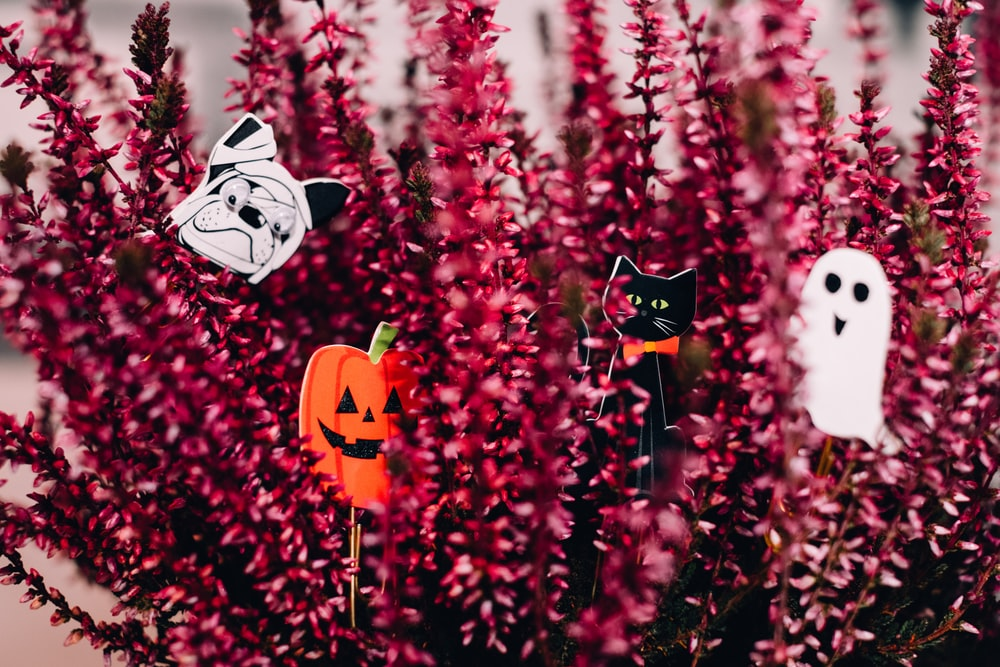 maroon flowers with Halloween decors
