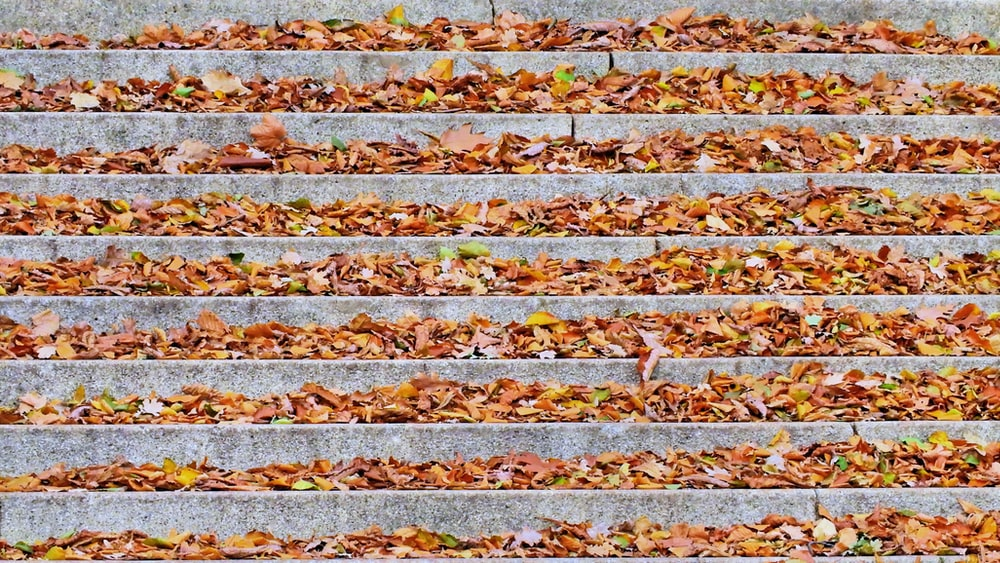 dried leaves on gray concrete stairs