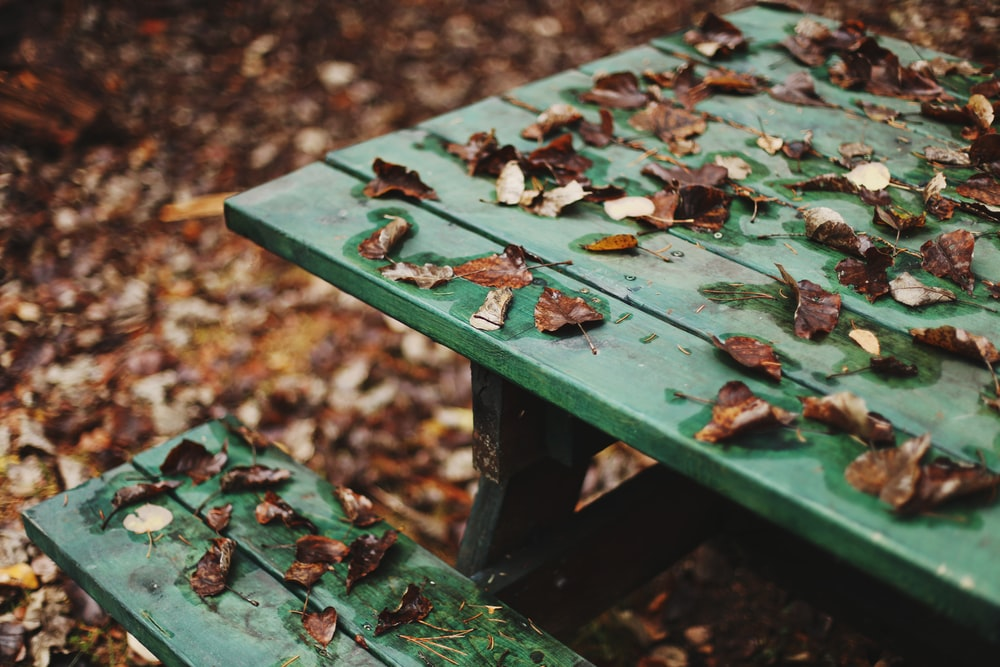 brown withered leaves on green wooden picnic table