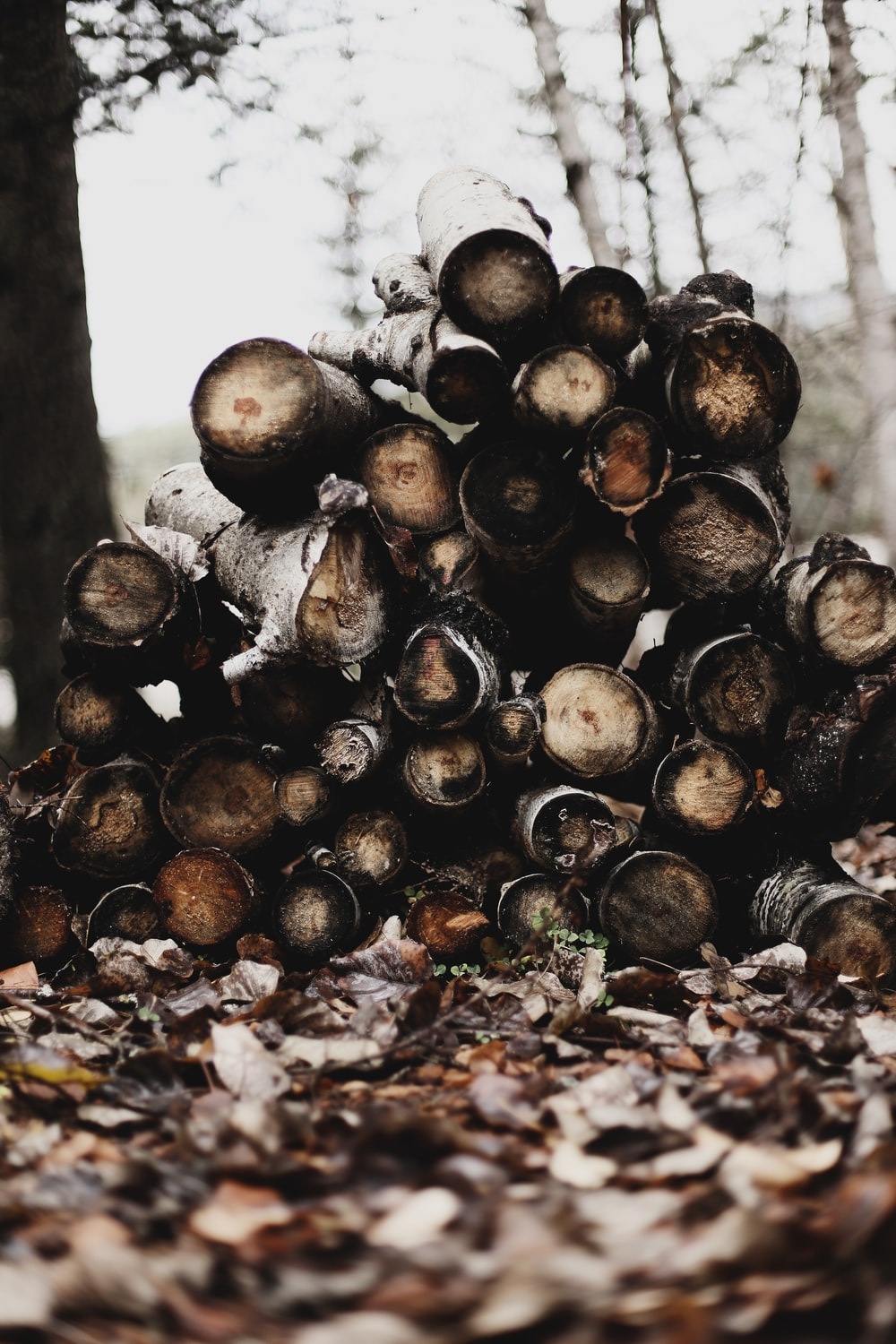 selective focus photography of firewood