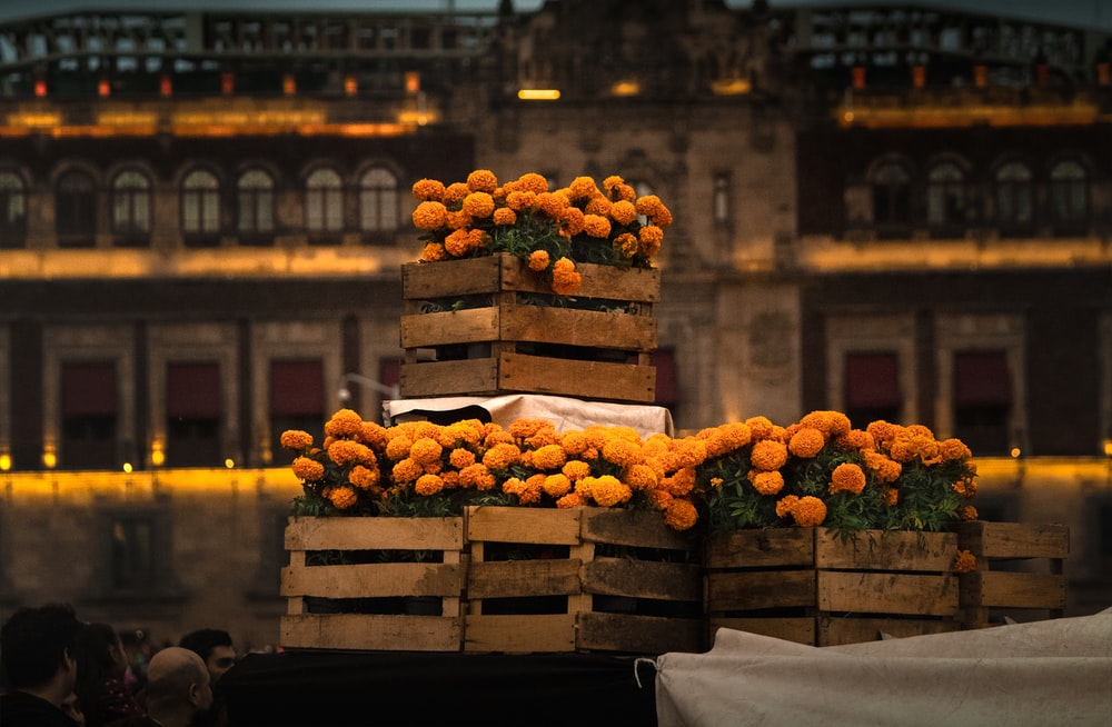 yellow petaled flowers on brown wooden crates