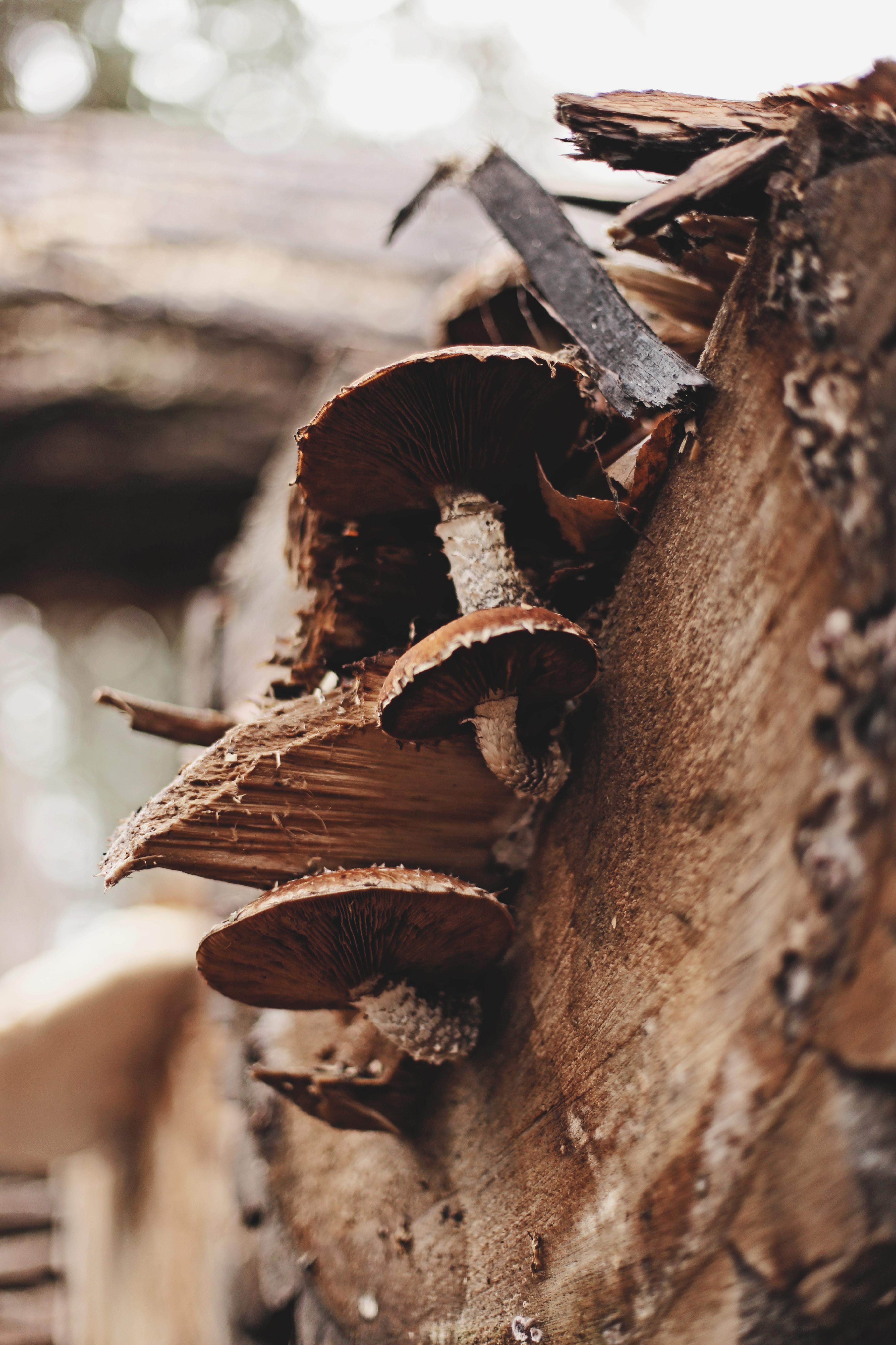brown mushroom on tree