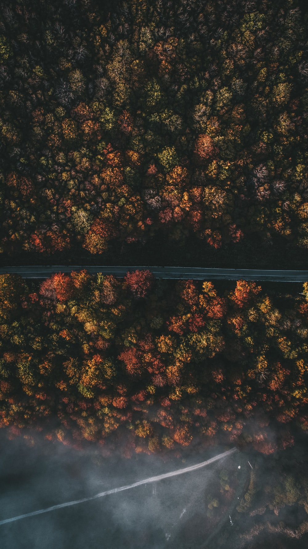 aerial photography of roadway and trees