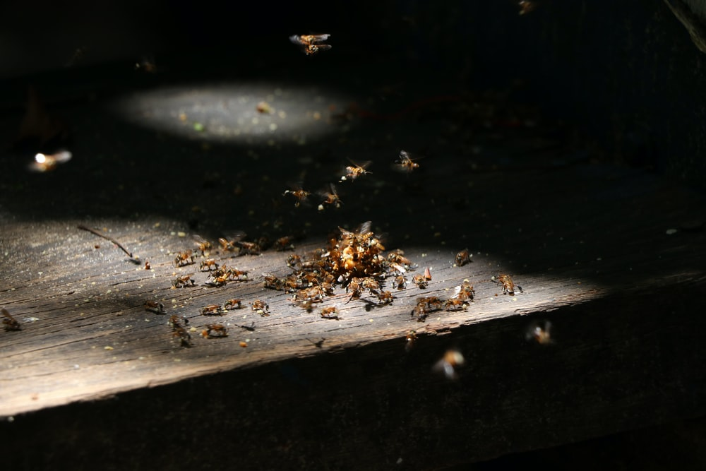 shallow focus photo of bees on brown wooden surface