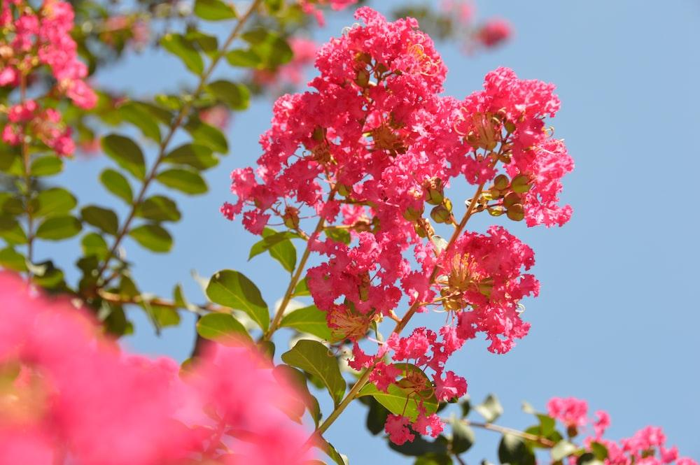 close-up photo of pink petal flowers