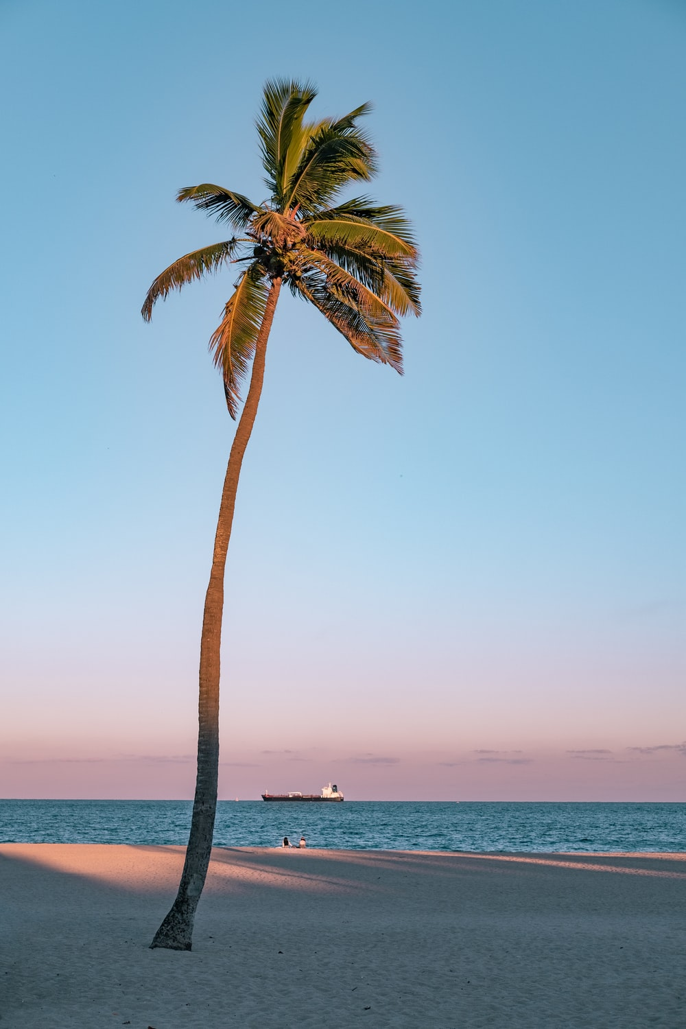 palm tree on seashore