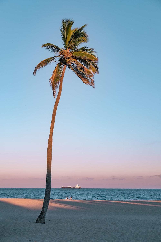 palm tree on seashore