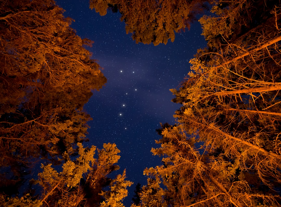 The big dipper through the trees above a raging campfire.