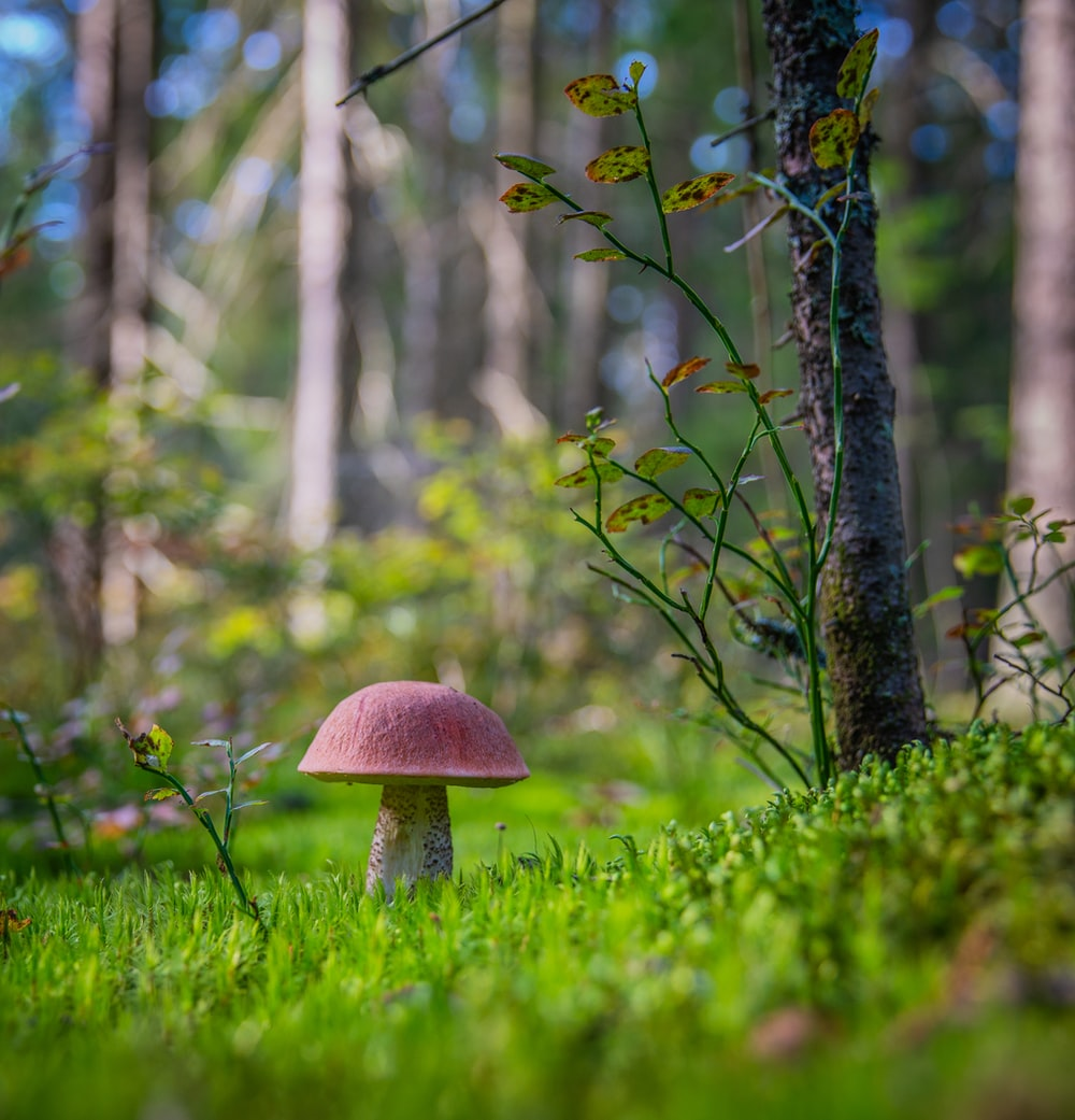 selective focus photography of red mushroom beside green plant and grasses