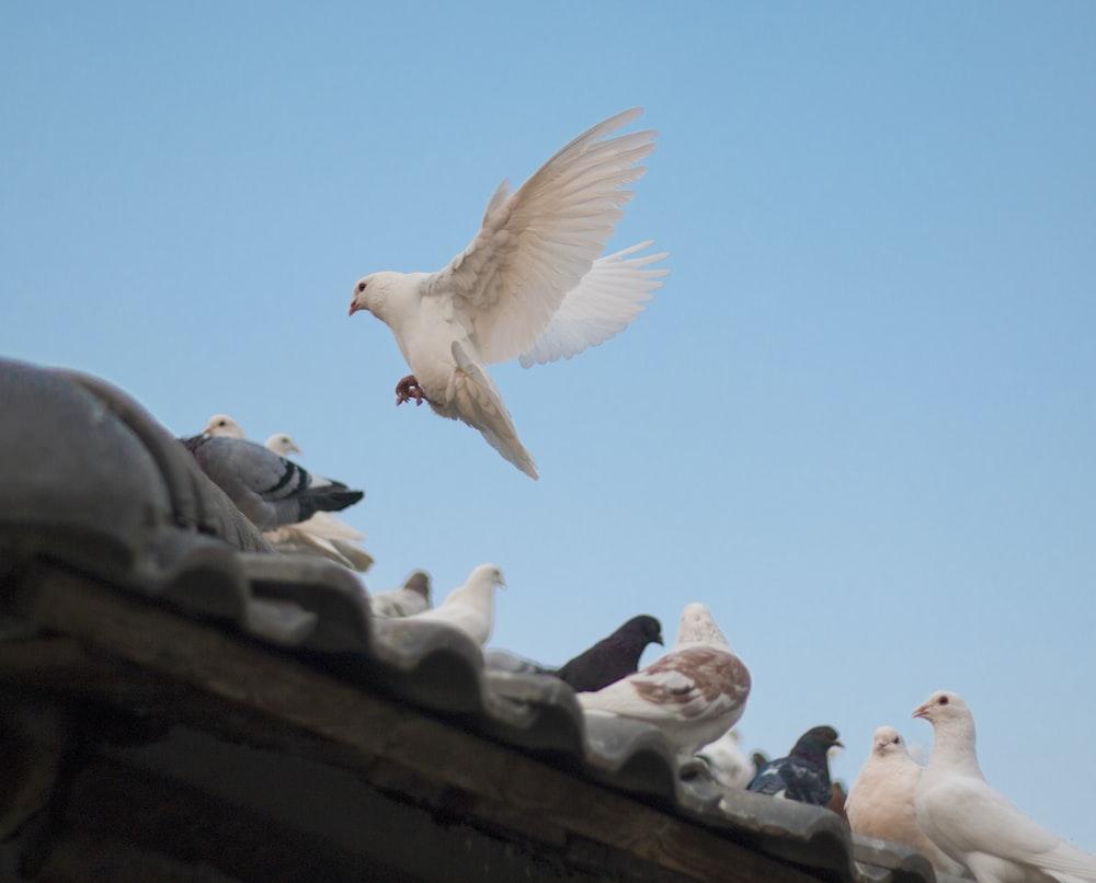 birds on roof shingle