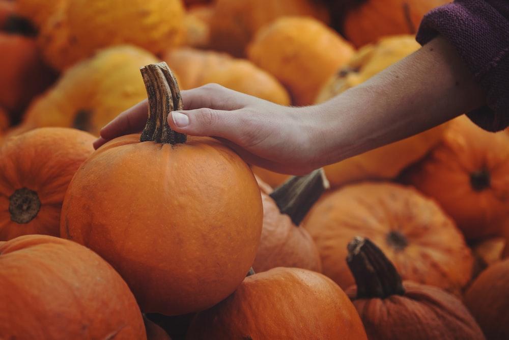 person touching pumpkin
