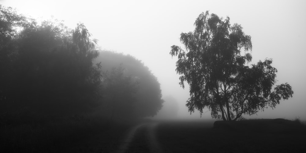tree in grayscale photo