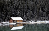 cabin near body of water and pine trees