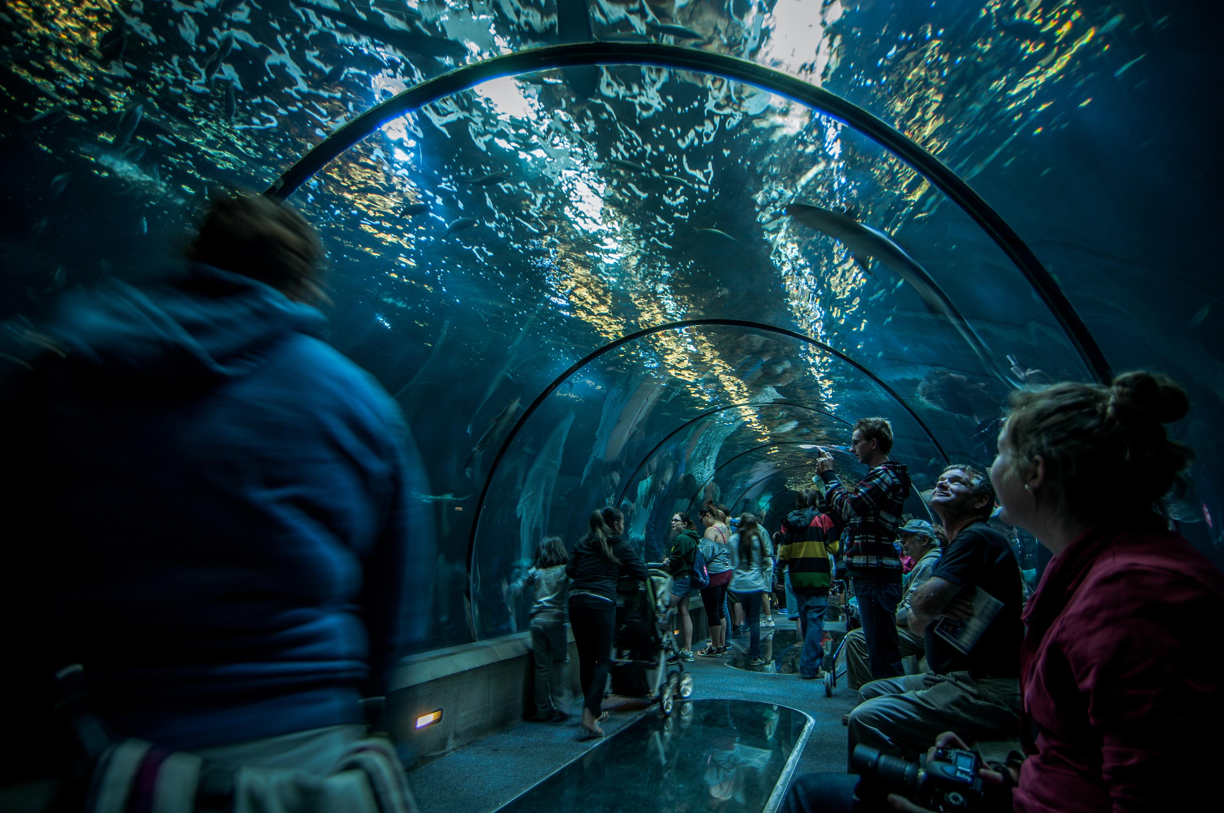 people inside aquarium