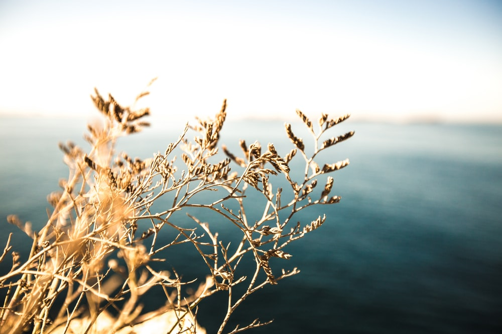 brown leaves on cliff