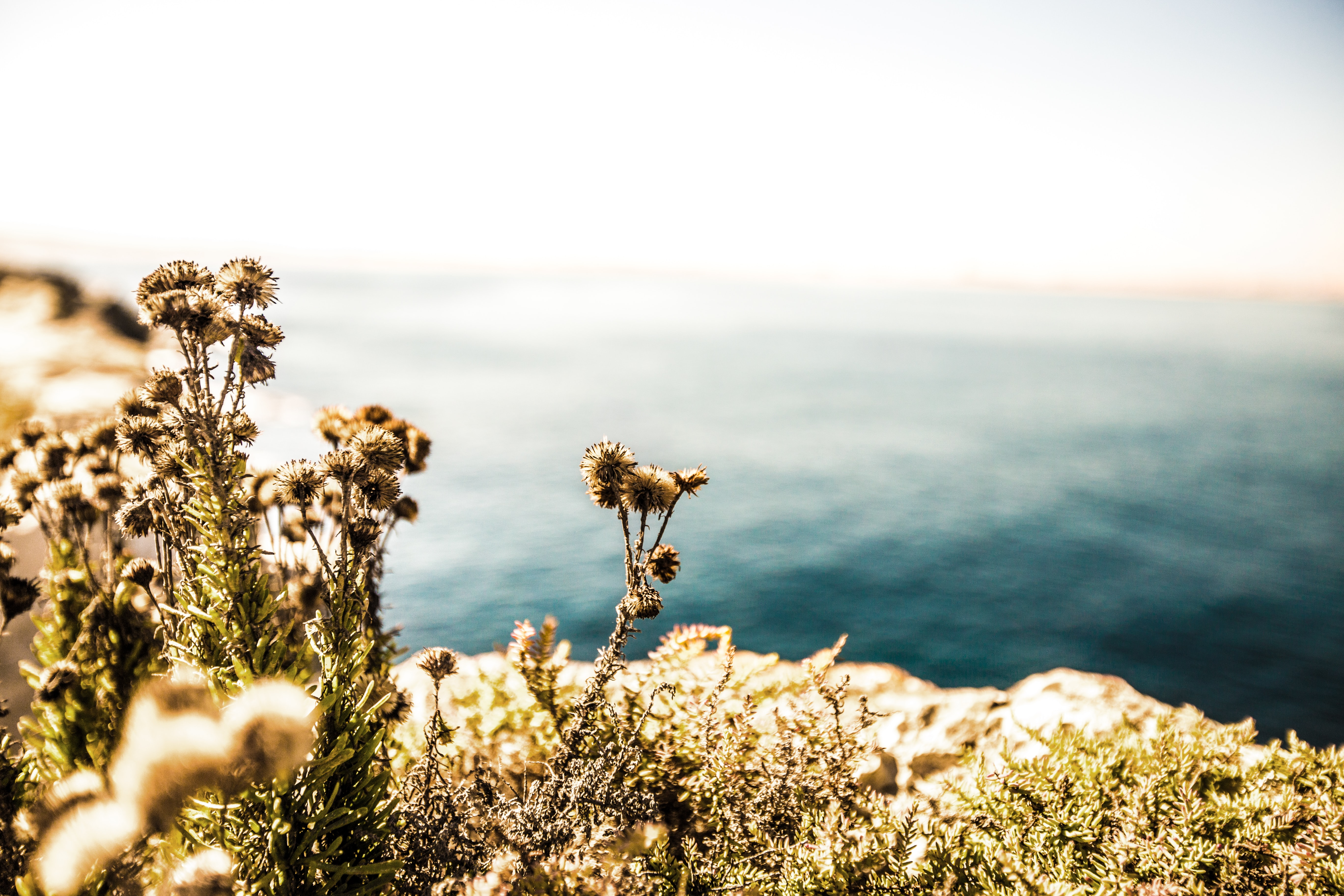 selective focus photography of flowers on cliff