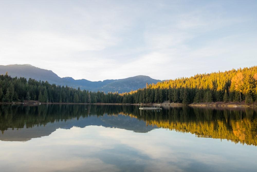 calm body of water between tress under gray sky