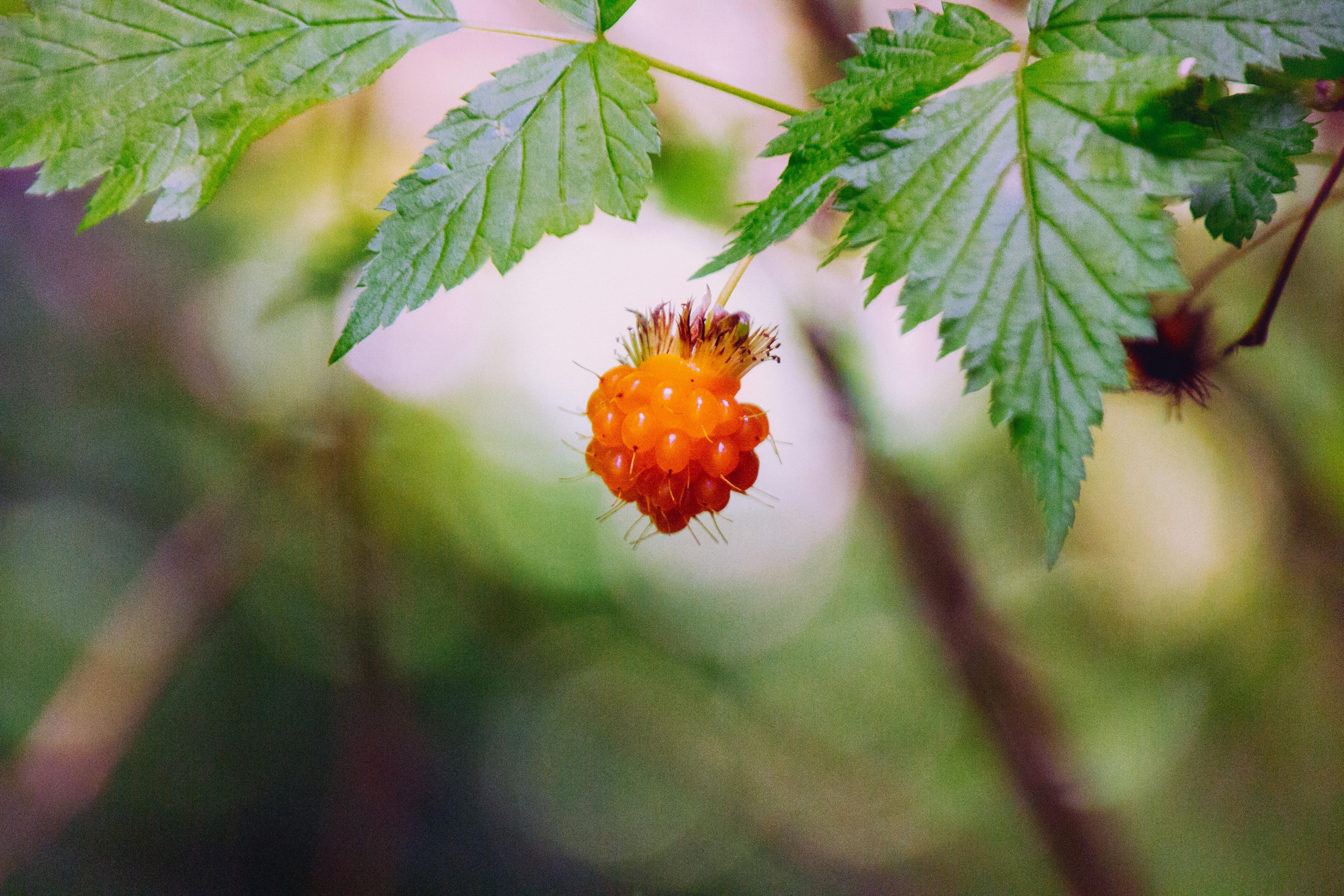 orange fruit in selective focus photography