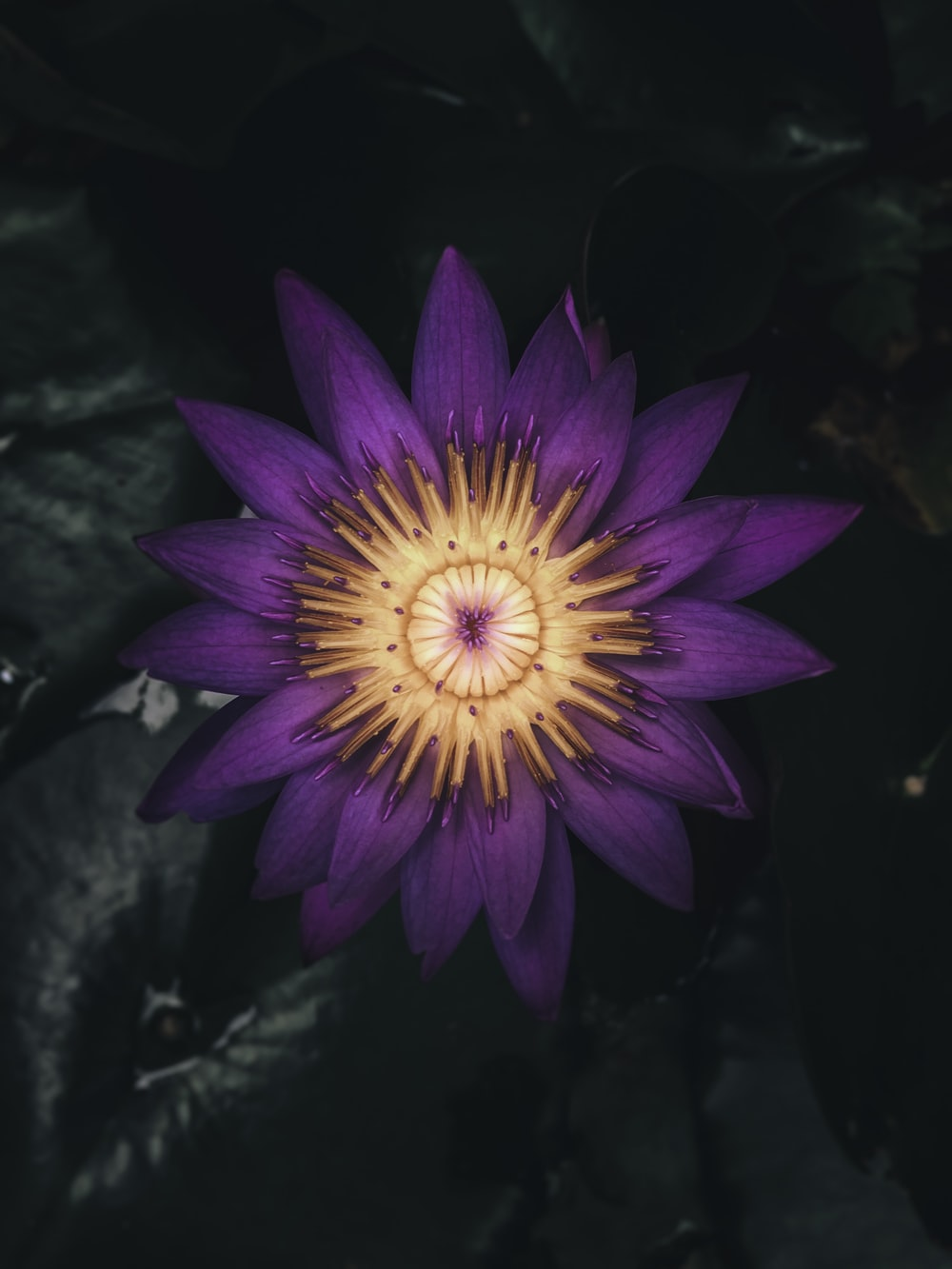 purple and yellow petaled flower