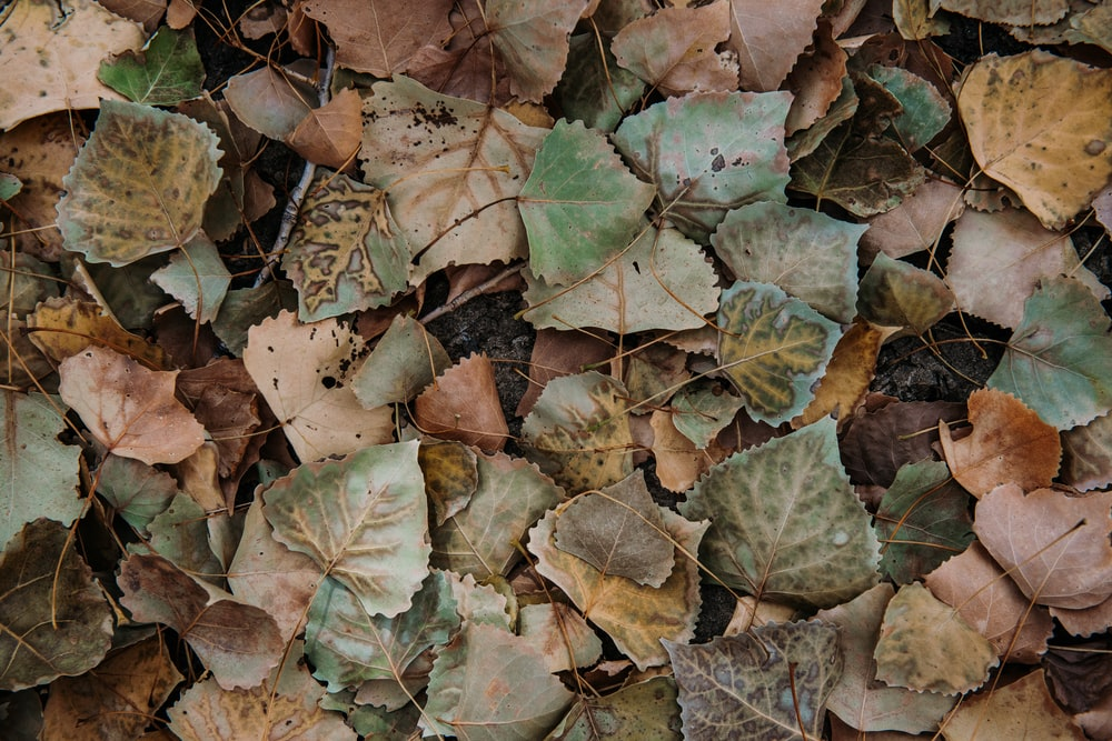 brown dried leaves