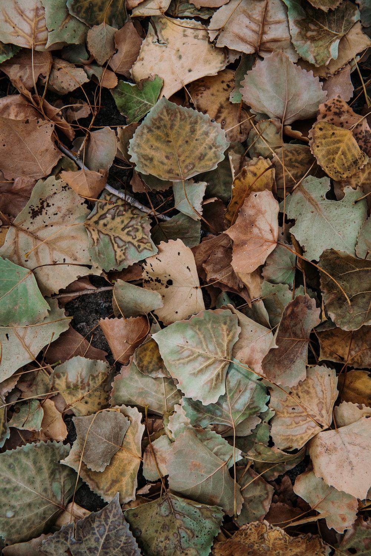 dry leafs