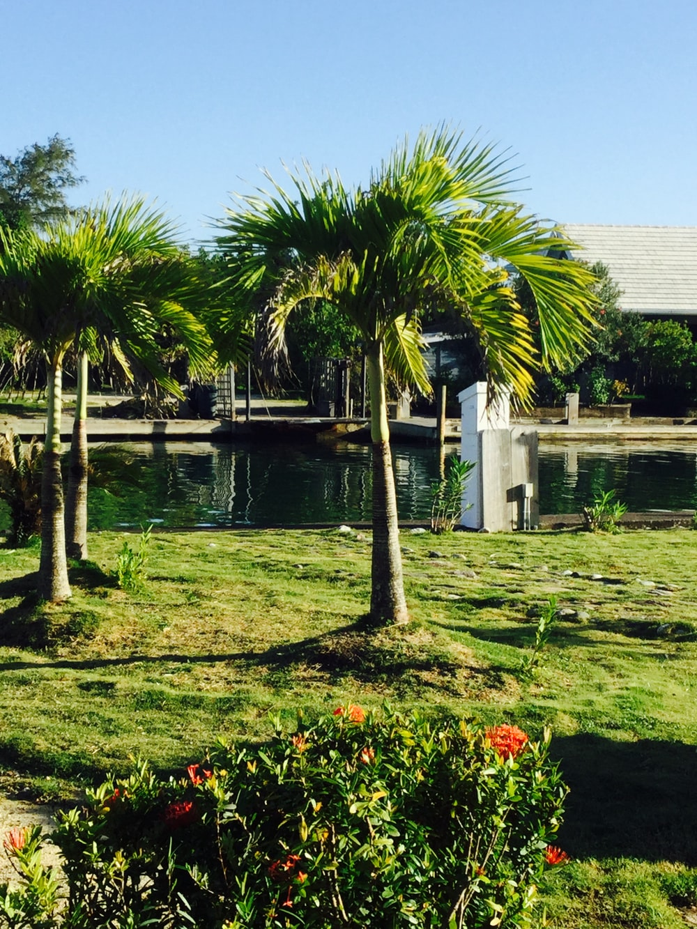green palm trees near pond