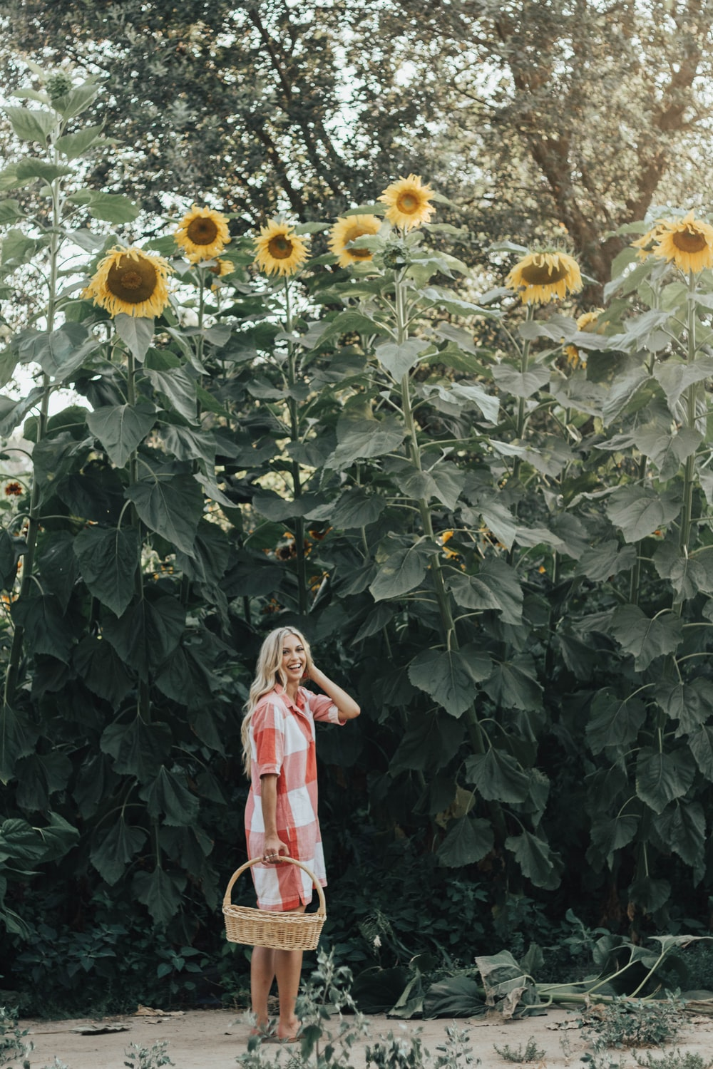 woman holding basket standing under sunflowers