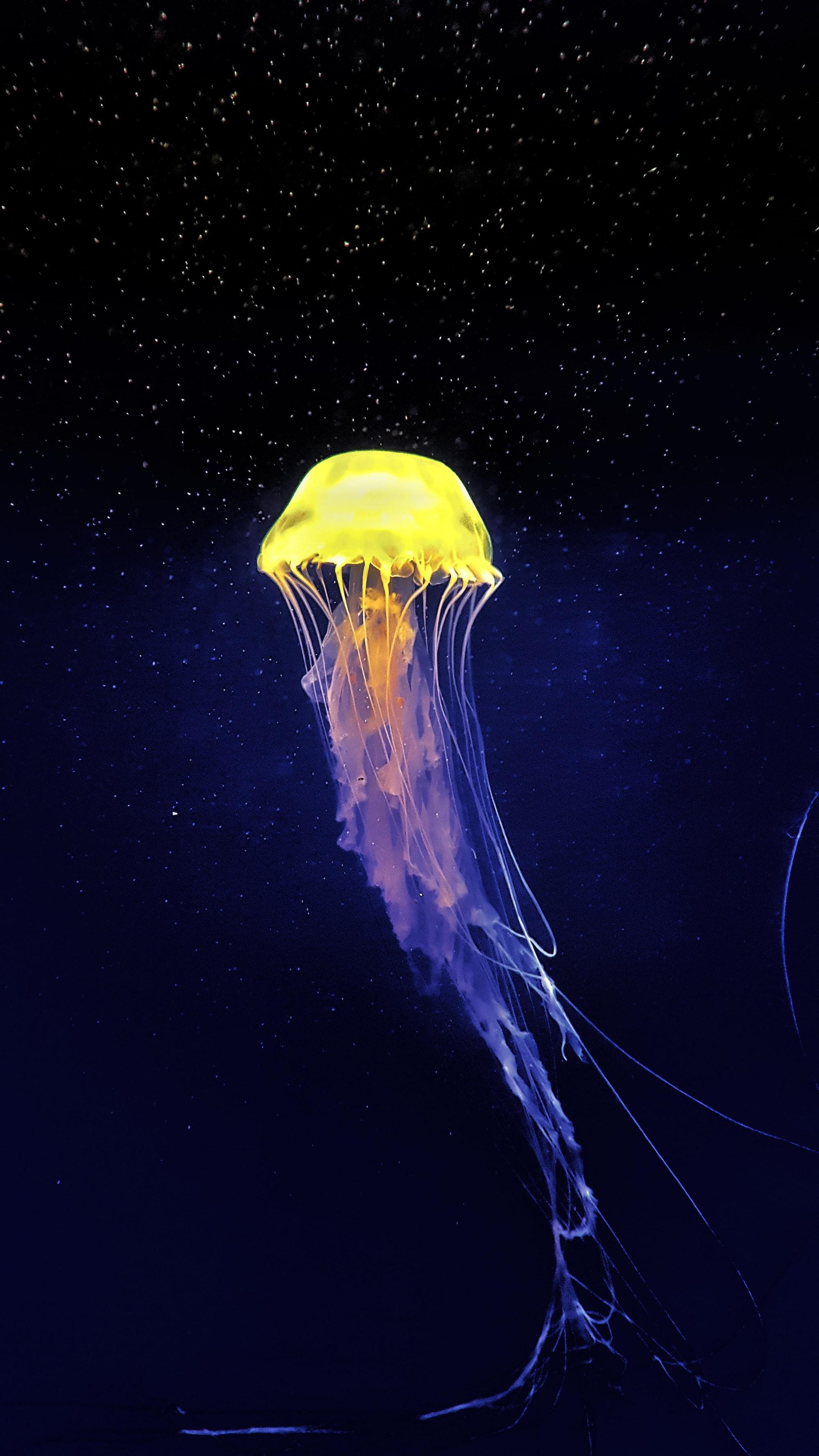 Graceful jellyfish