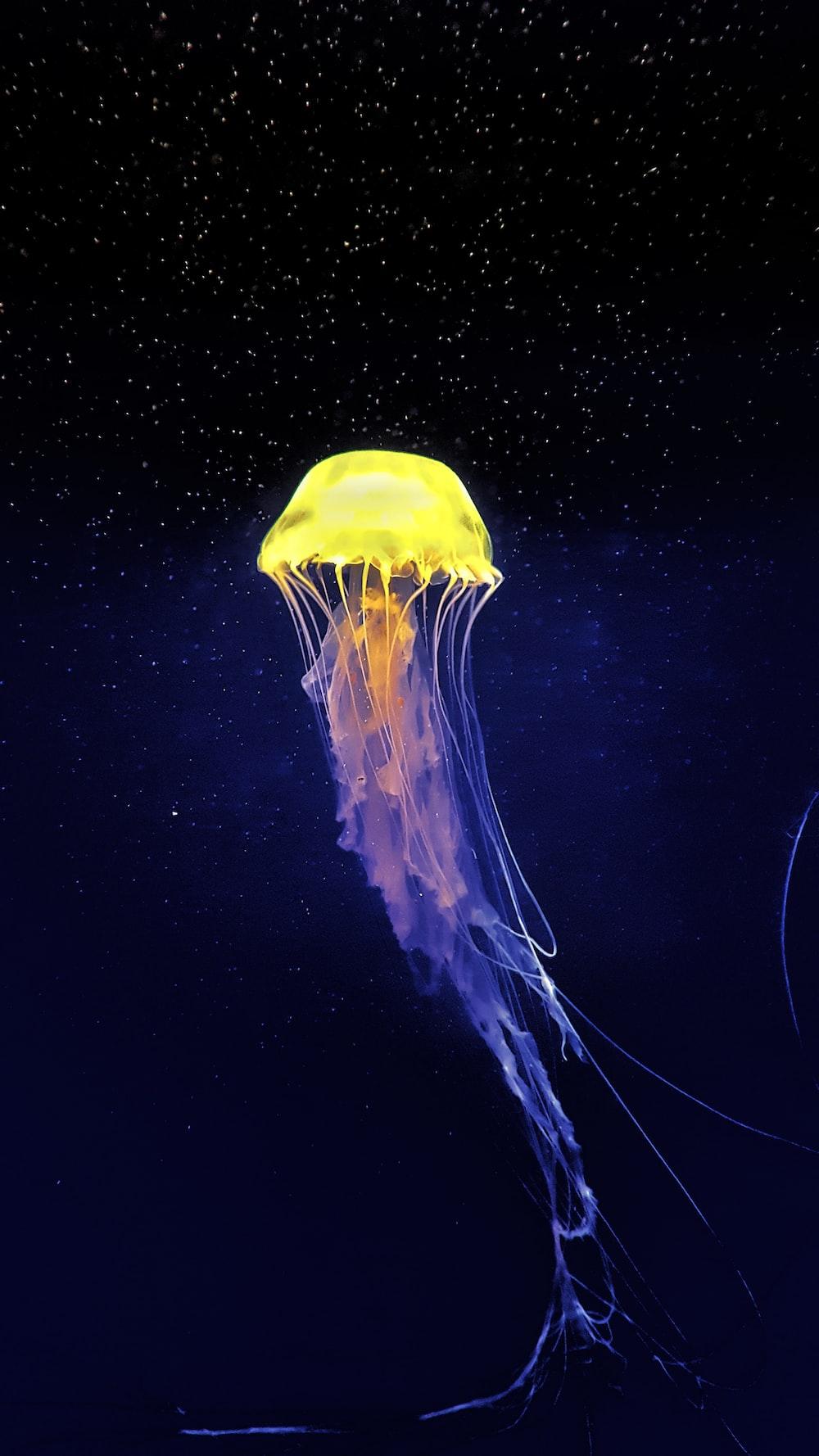 yellow and white jellyfish