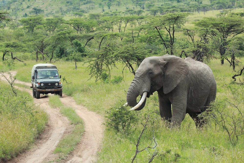 vehicle near trees and elephant