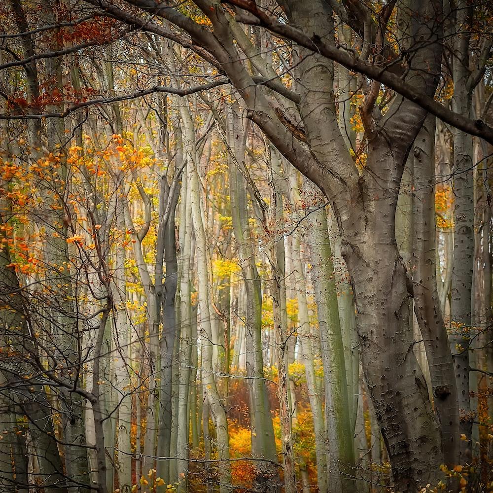 yellow and orange leafy trees