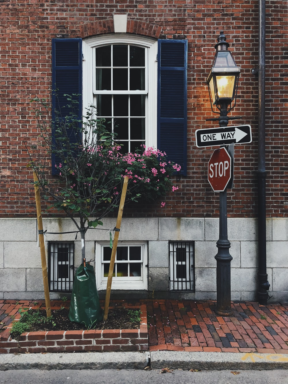 pink petaled flower and stop signage beside building