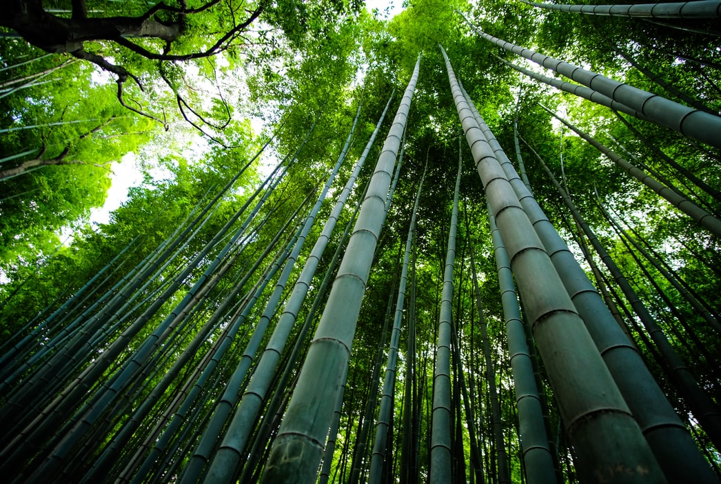 Bamboo plants can grow up to 36 inches in a day.