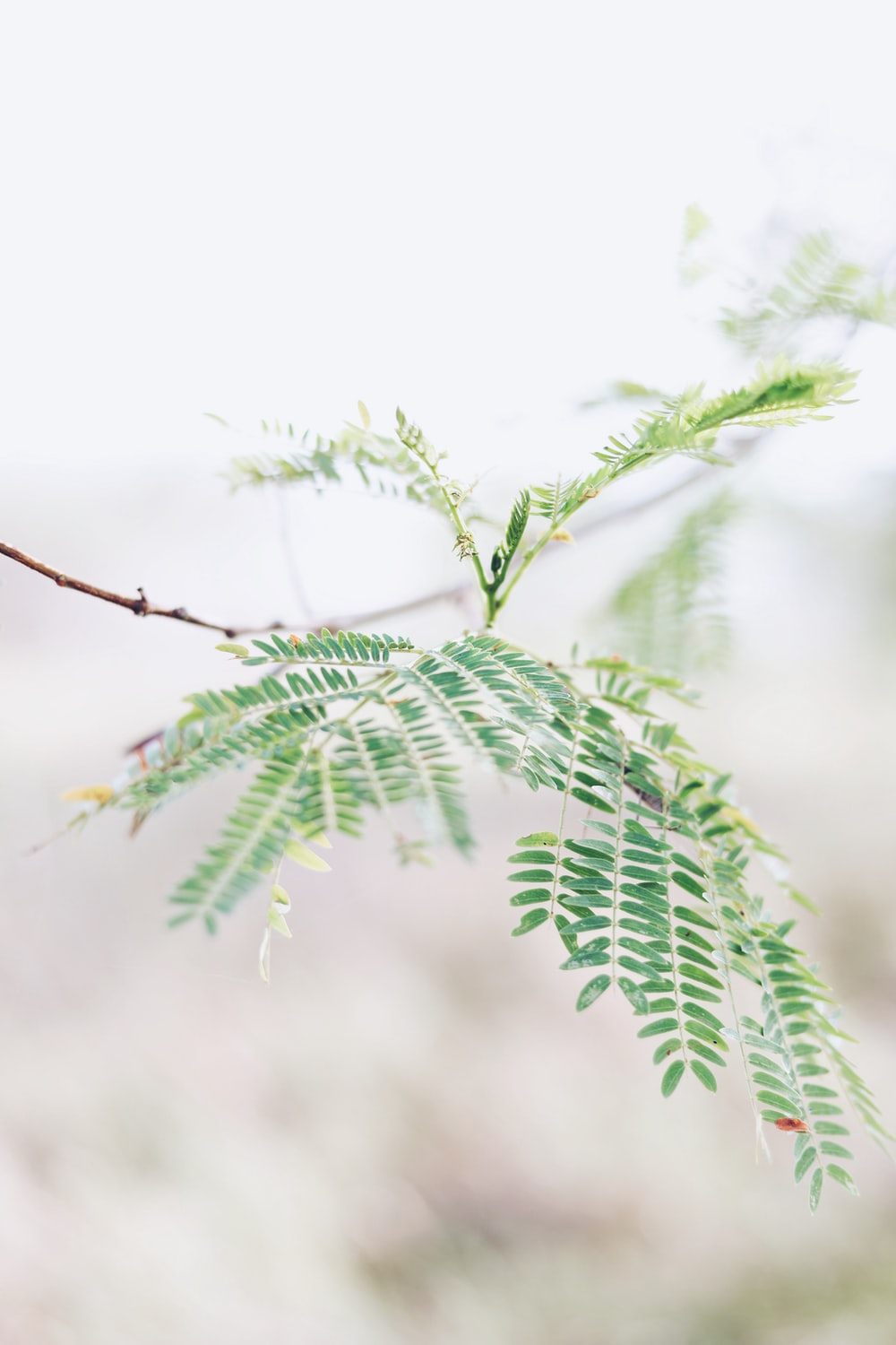 bokeh photography of green-leafed plant