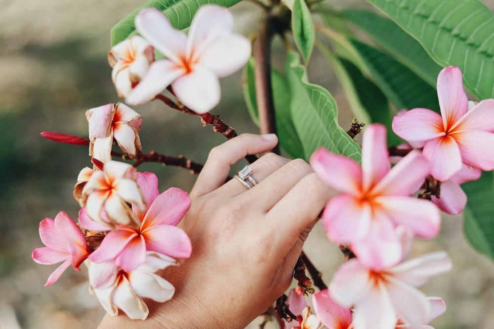 woman touching plumeria flower