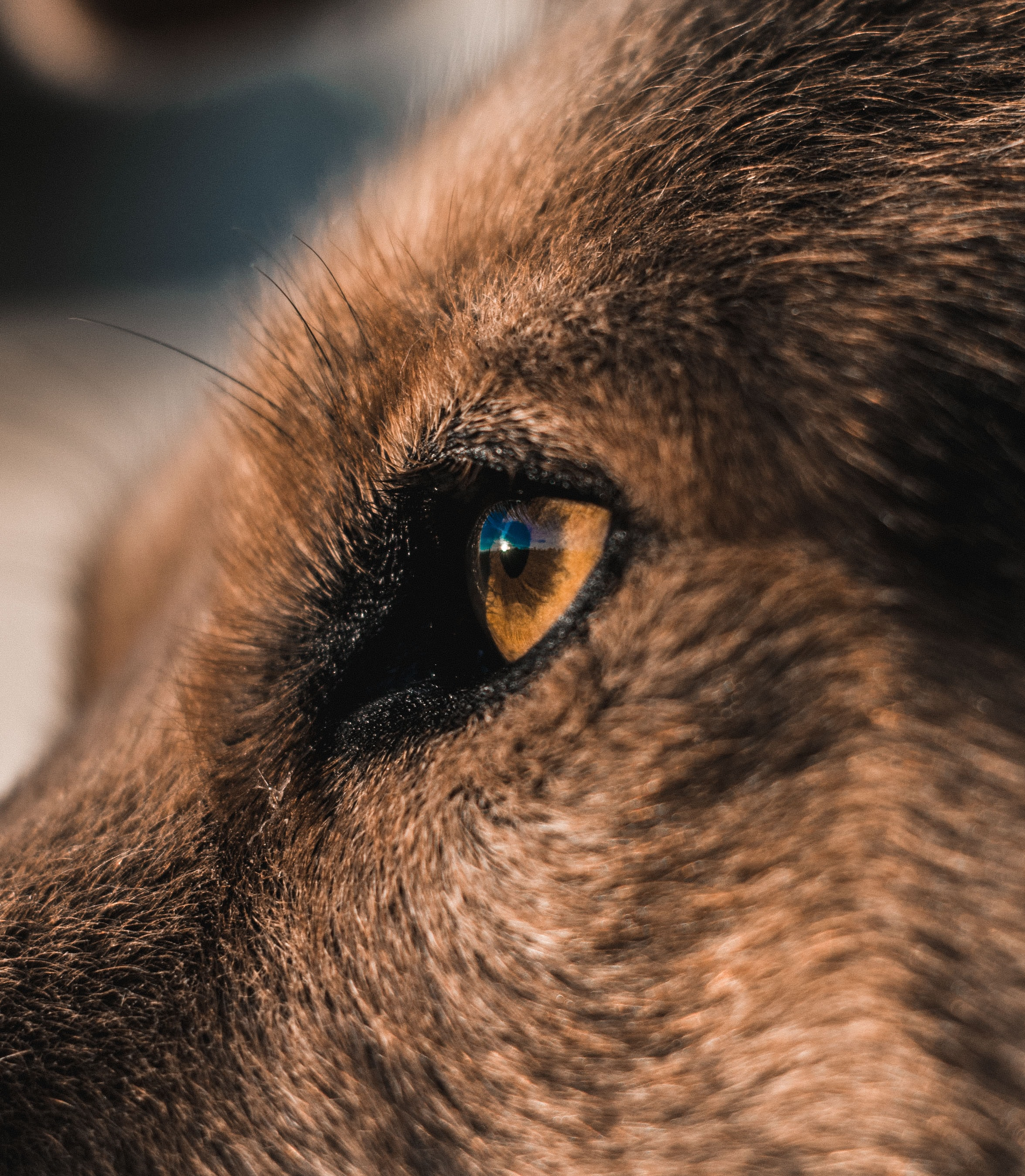 close-up photography of animal eye