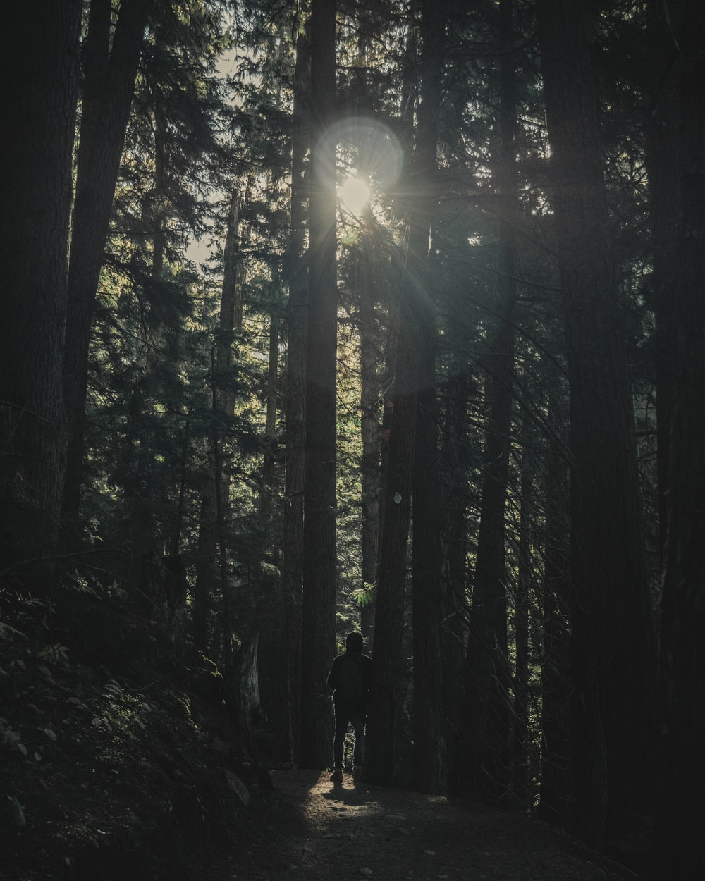 person standing on woods