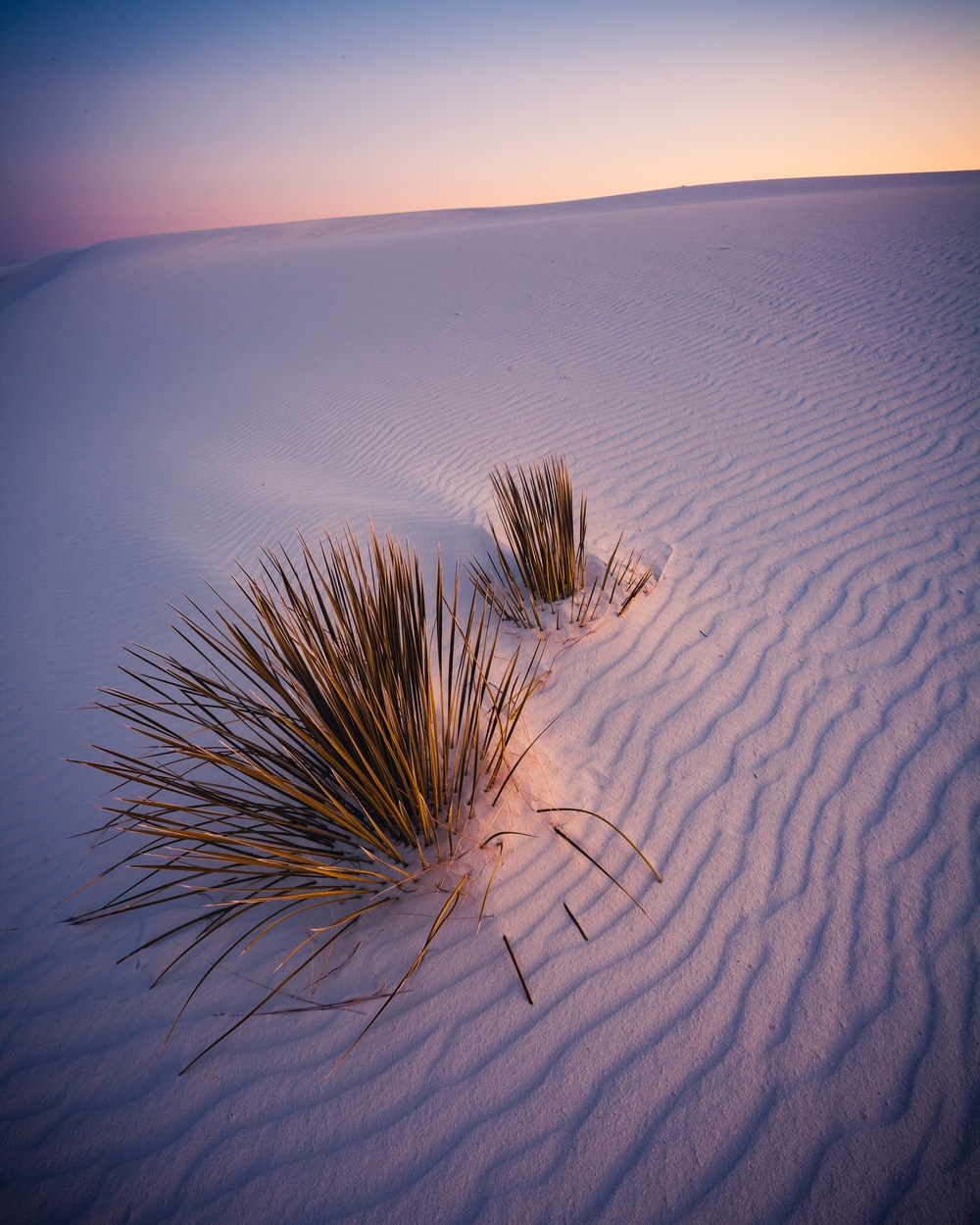green plants on white sands during daytime