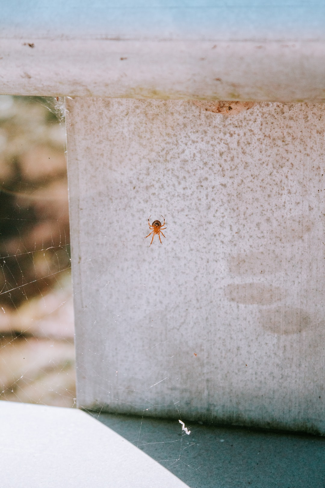 I was actually more excited about finding an actual spider in a web that taking a picture was a bonus.
