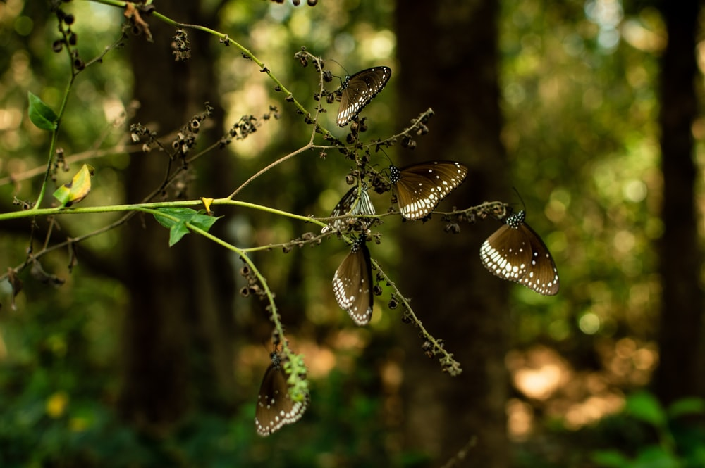 brown butterflies standing on green plant