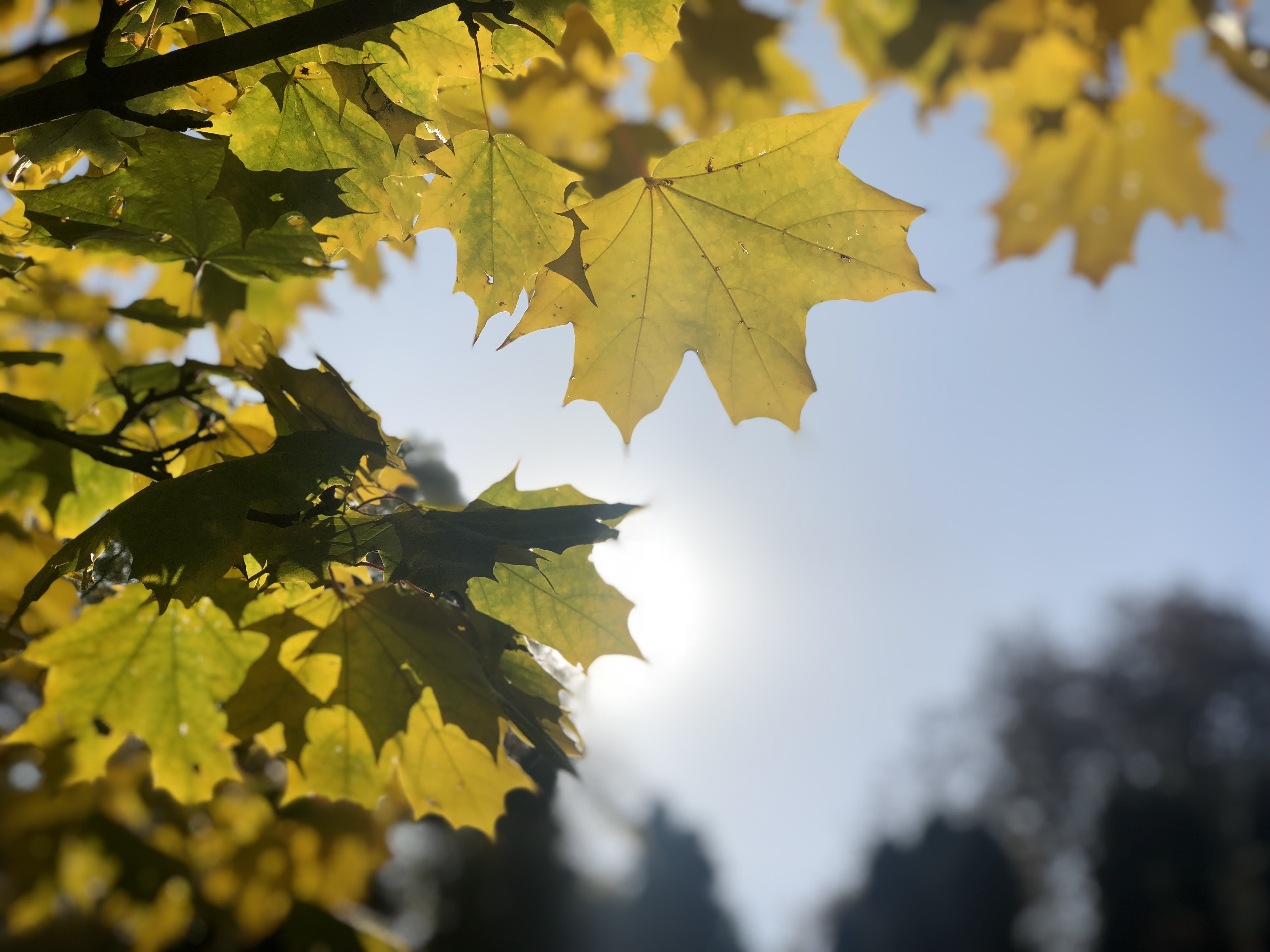 selective focus photography of green and yellow tree