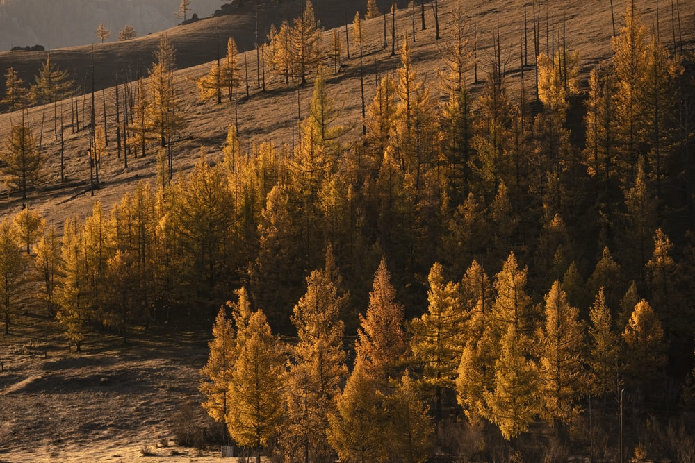 landscape photography of brown-leafed trees