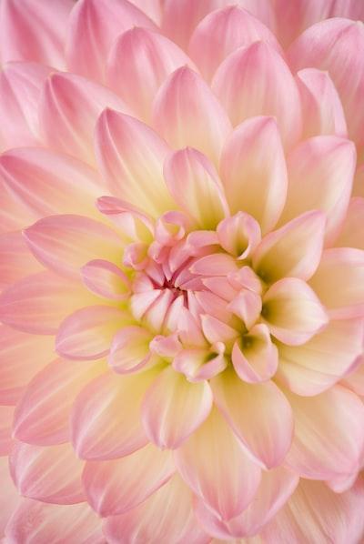 kwiat-z-bliska